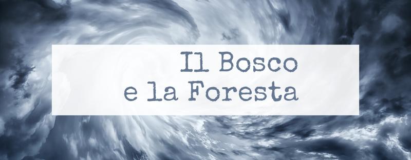 Il bosco e la foresta